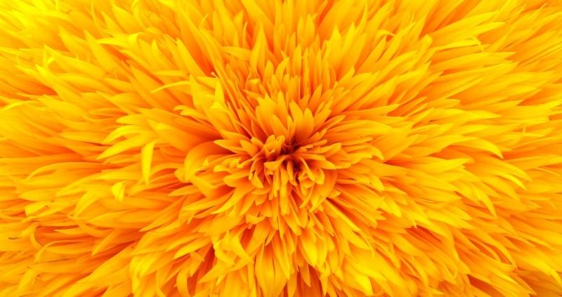 F010_senza_cornice Набор изображений для панели Картина без рамки